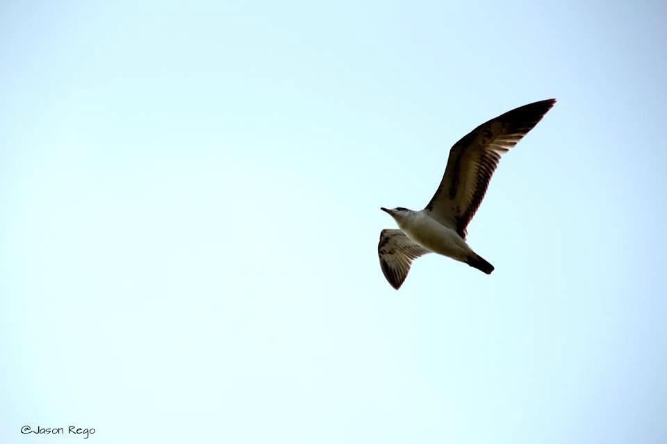 LIKE BIRD WINGS (1/3)